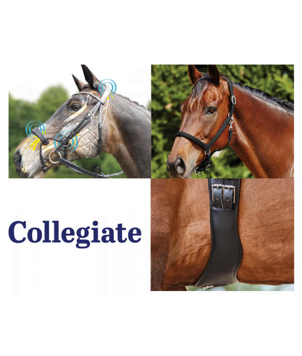 epic-equestrian-multiprize-draw-93666.png